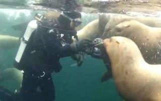 duiken in British Columbia Vancouver Island