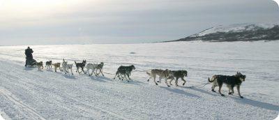 dagtrips Whitehorse hondenslede