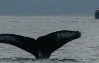 Vancouver Island landschap wildlife