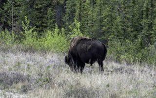 Kitaskino Nuwenëné Wildland Provincial Park