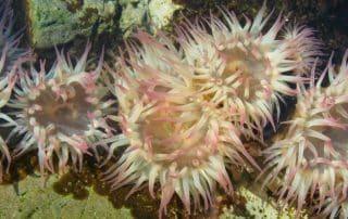 onderwatervulkanen koralen Vancouver Island