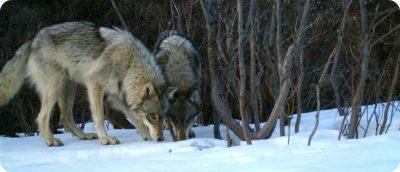 wolf Rampart Creek Campground