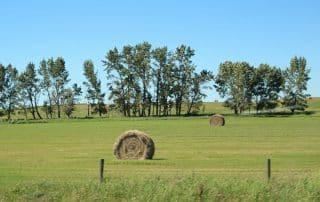 Calgary naar Lethbridge prairie Alberta