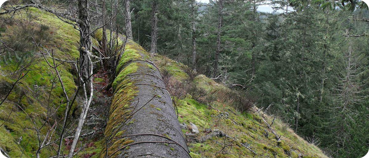 Sooke Flow Pipe Trail Vancouver Island