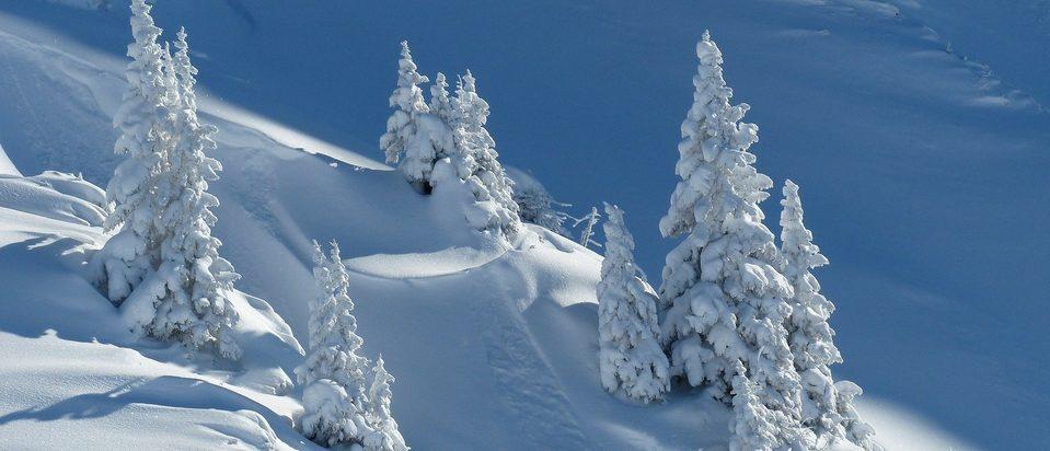 Sneeuwval Labrador